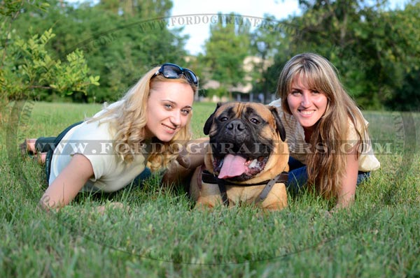 Lightweight Leather Bullmastiff Harness