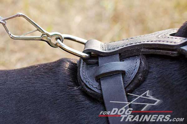 Rust proof nickel hardware for leather Doberman harness