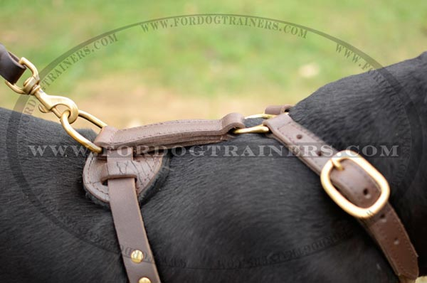 Stitched and soft padded back plate for leather Pitbull harness
