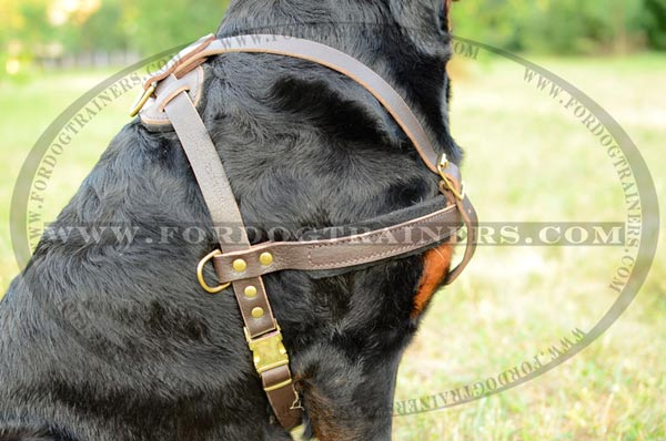 Leather Dog Harness with easy release buckle