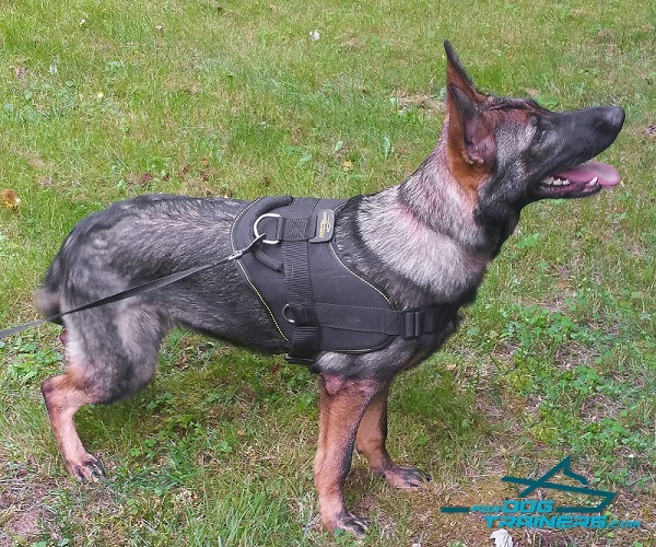 Any Weather German Shepherd Harness for Better Control