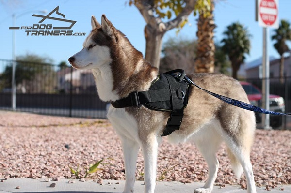 Nylon Husky Harness for Pulling nad Tracking Activity