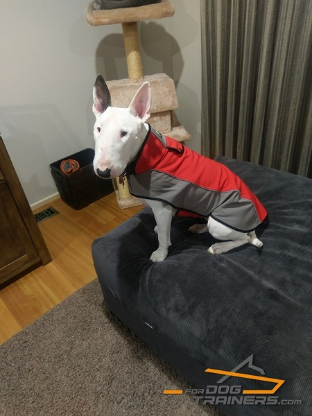 Nylon Dog Harness Insulating Heat for English Bullterrier