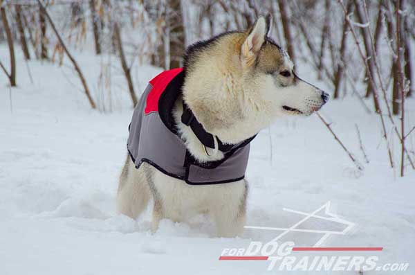 Nylon winter coat for Huskies