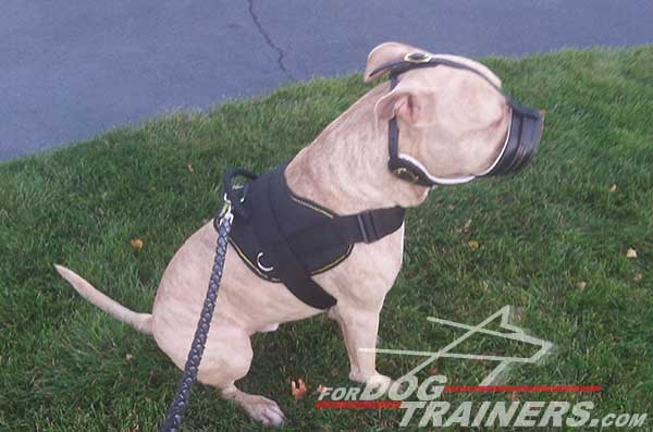 Easy to grab handle for better controlling your Pitbull