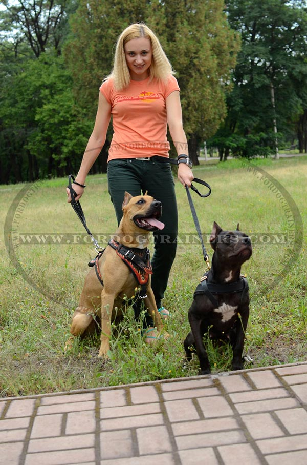 Leather Pitbull Harness for Walking in Style