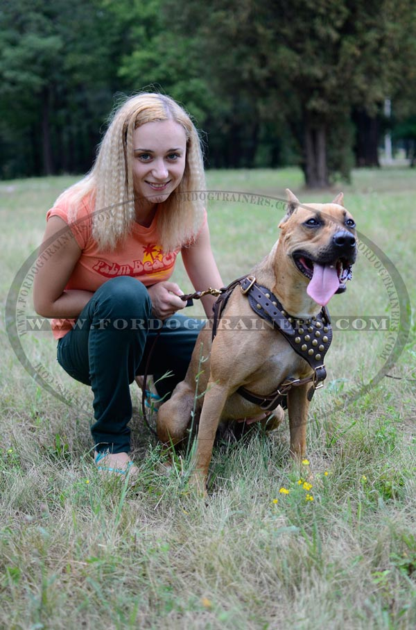 Rust-resistant brass hardware for studded leather harness for Pitbull