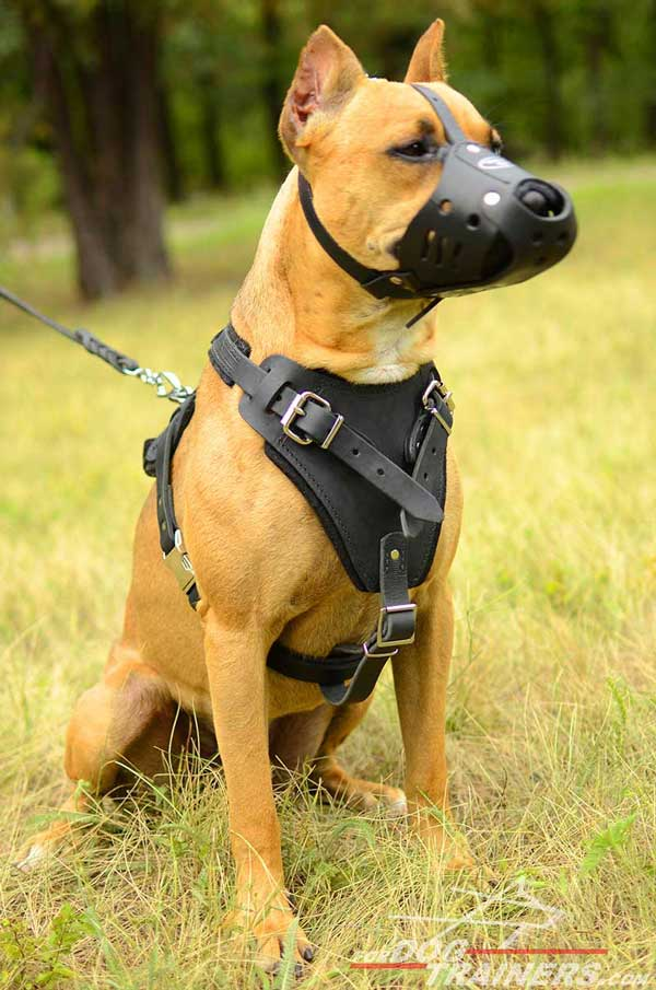Durable leather Pitbull harness for easy handling and controlling
