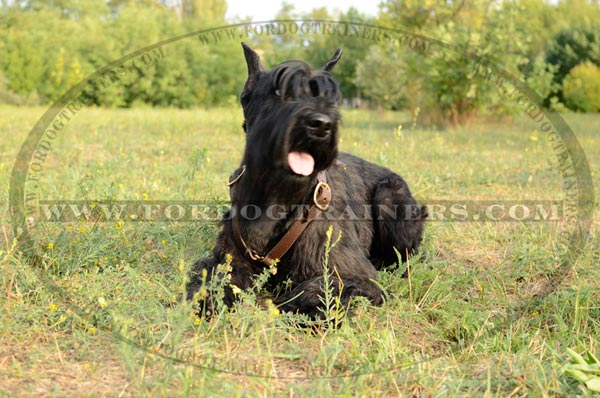 Leather Dog Tracking Harness