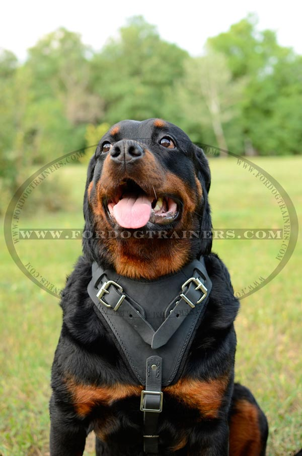Easy adjustable leather harness