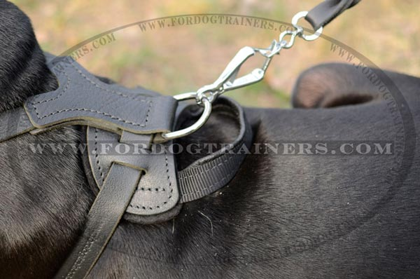 Strong D-Ring on Leather Pitbull Harness