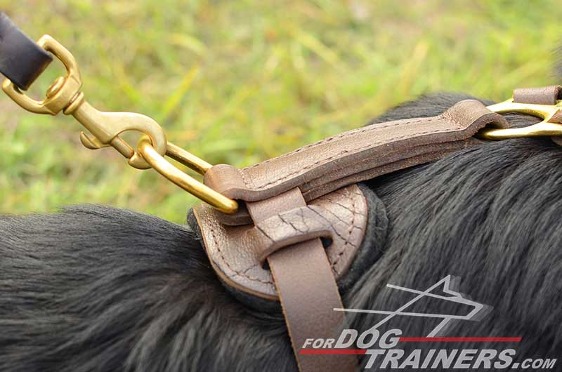 Brass D-Ring of Leather German Shepherd Harness