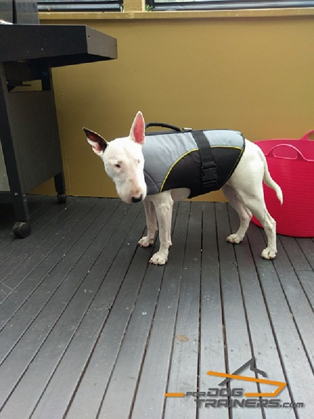 Super Comfortable Rehabilitation English Bullterrier Vest