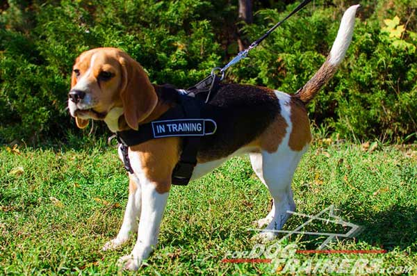 Beagle Harness Nylon Made with Identification Patches On Both Sides