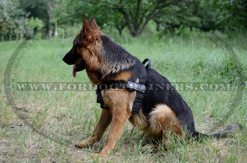 Large Dog Harness Personalised