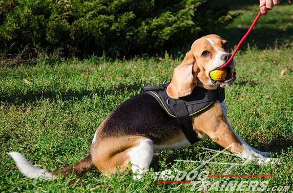 Nylon Beagle Harness Lightweight Meant for Long-Time Wear