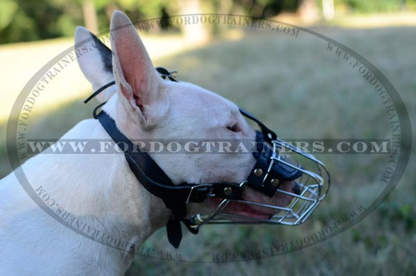 Well Ventilated Wire Cage Bull Terrier Muzzle