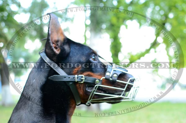 Cage Style Doberman Dog Muzzle with Adjustable Straps