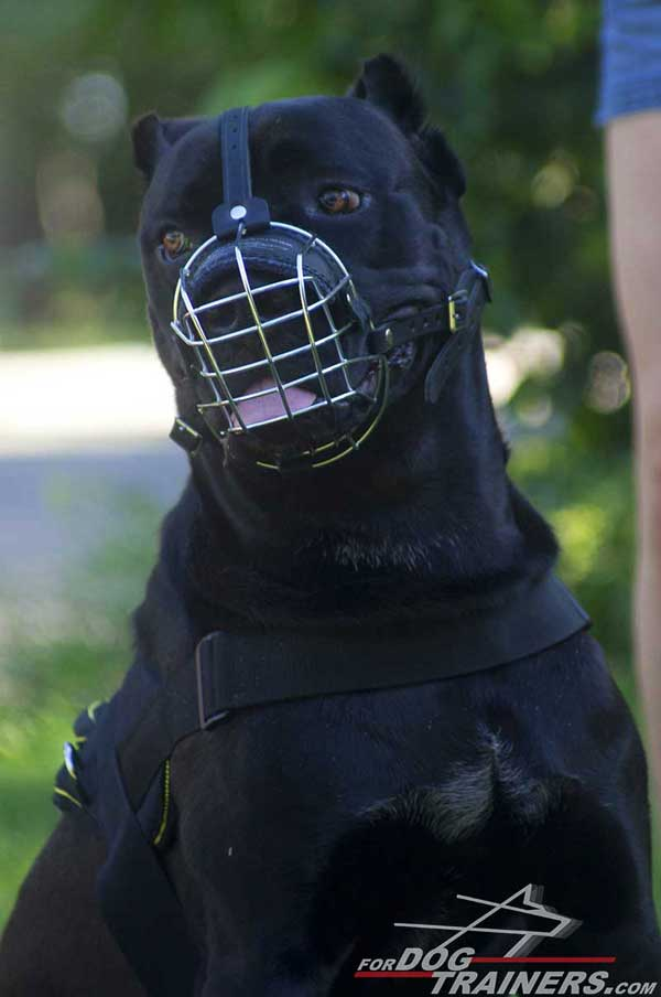 Wire Cage Cane Corso Muzzle with Padded Nose Part