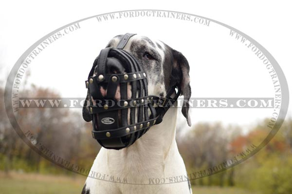 Well Ventilated Leather Great Dane Muzzle