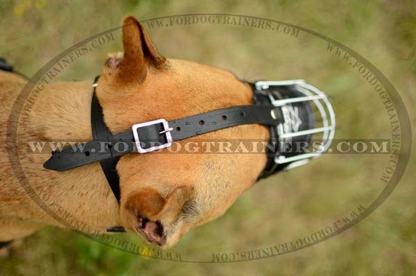 Adjustable buckles for snug fit of wire basket Pitbull muzzle