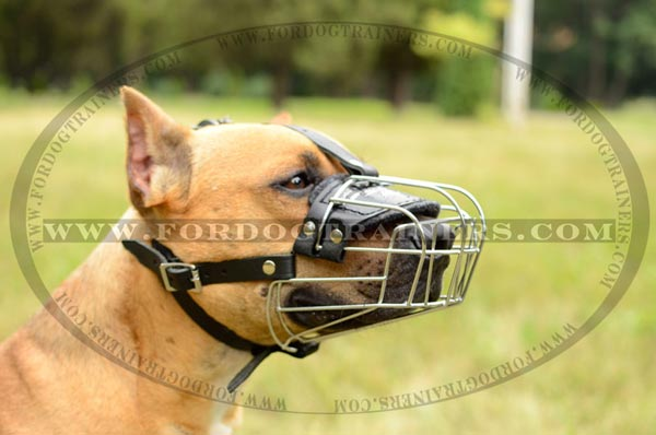 Strong riveted wire basket muzzle for Pitbull