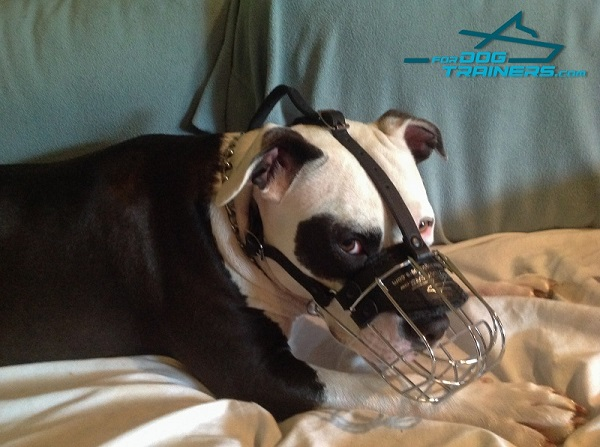 Easy Adjustable Wire Basket Dog Muzzle for Pitbull