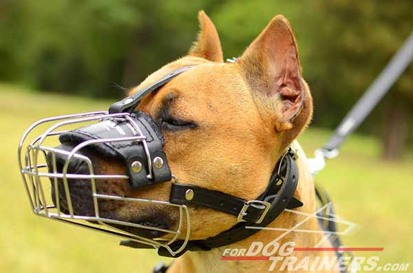 Wire basket Pitbull muzzle with nose padding