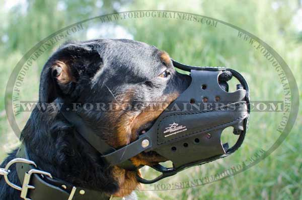 Leather Rottweiler Muzzle with Perfect Air Circulation