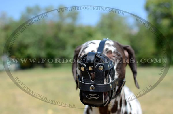 Well Ventilated Adjustable Leather Muzzle on Dalmatian
