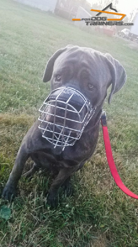 Ventilated Metal Muzzle for Mastiff Comfortable Walking and Training