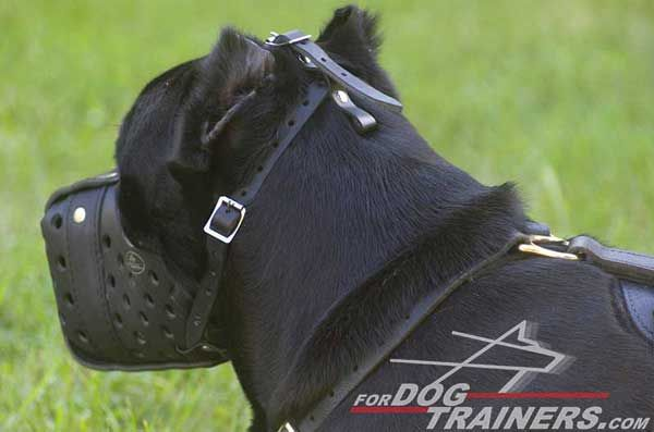 Cane Corso Leather Muzzle Durable Maintains Own Integrity