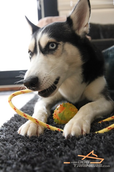 Top Quality Rubber Toy for Husky Training