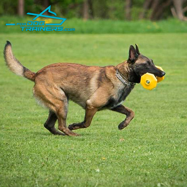 Schutzhund Dog Training umbbell with Yellow Polimeric Plates