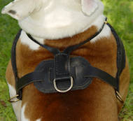 leather pulling dog harness for bulldog