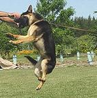 Dog bite tag ( dog bite tug ) made of jute - TE2_1
