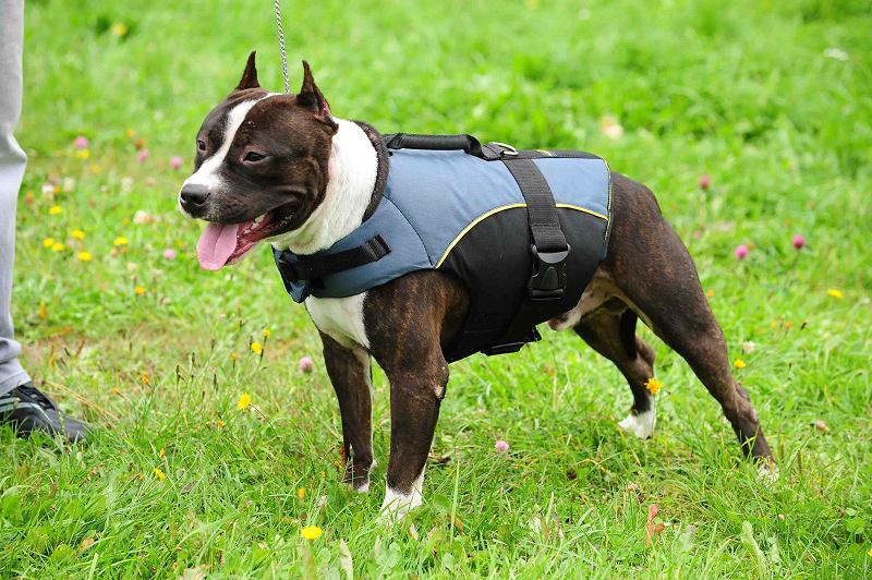 Nylon Winter Amstaff Harness