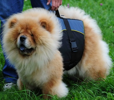30% Discount - NEW 2017 All Season Extra Strong Nylon Vest Harness - H13-Outdoor-Chow-Chow
