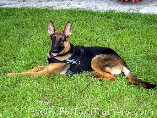German Shepherd Best Nylon Dog Harness for Pulling with ID Patches