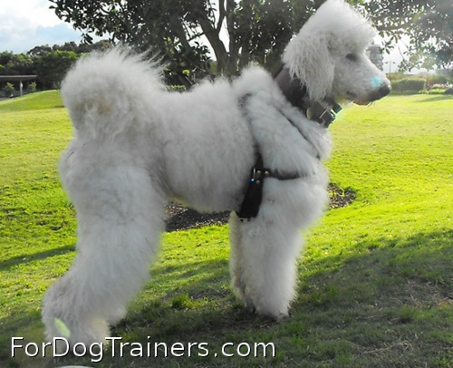 Super harness for cute dog