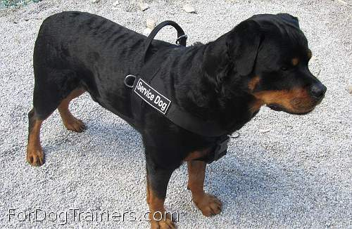 Ares's dream Better control everyday all weather dog harness