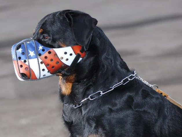 'American Flag' Handpainted Dog Muzzle Provides Safe Training and Walking