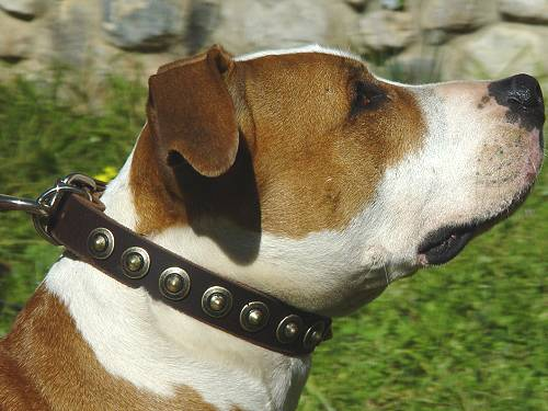 Gorgeous Leather Dog Collar - Fashion Exclusive Design_11