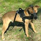 Lightweight Pitbull Nylon Harness for Any Weather Activity